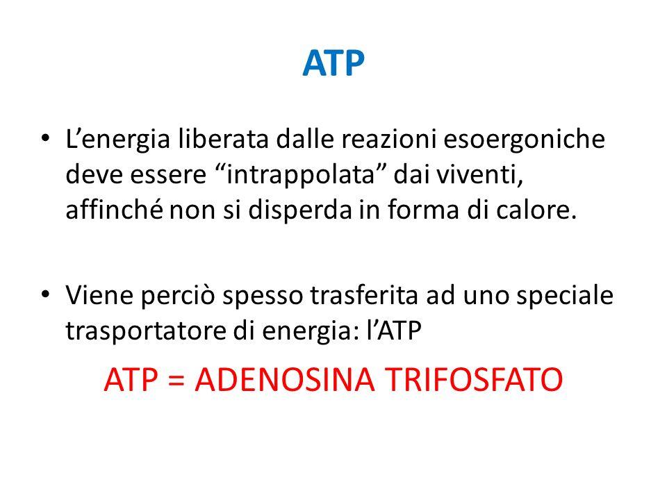 ATP = ADENOSINA TRIFOSFATO
