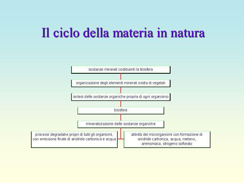 Il ciclo della materia in natura