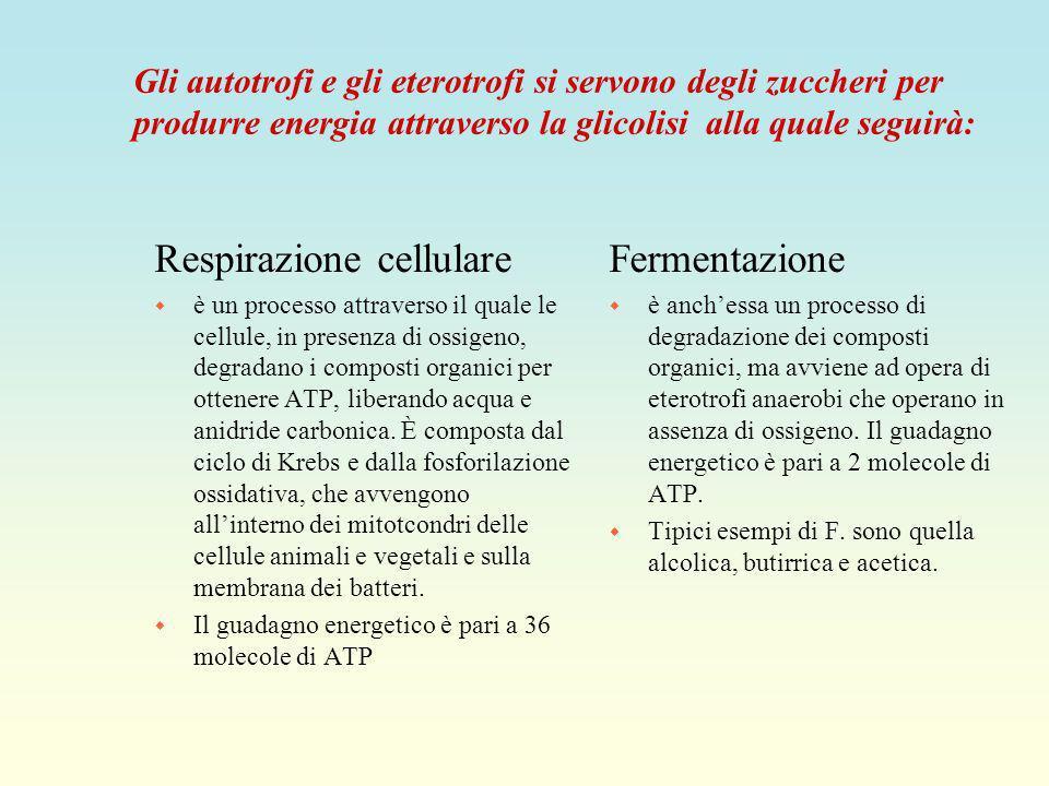 Respirazione cellulare Fermentazione