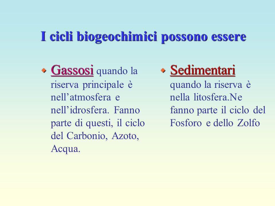 I cicli biogeochimici possono essere