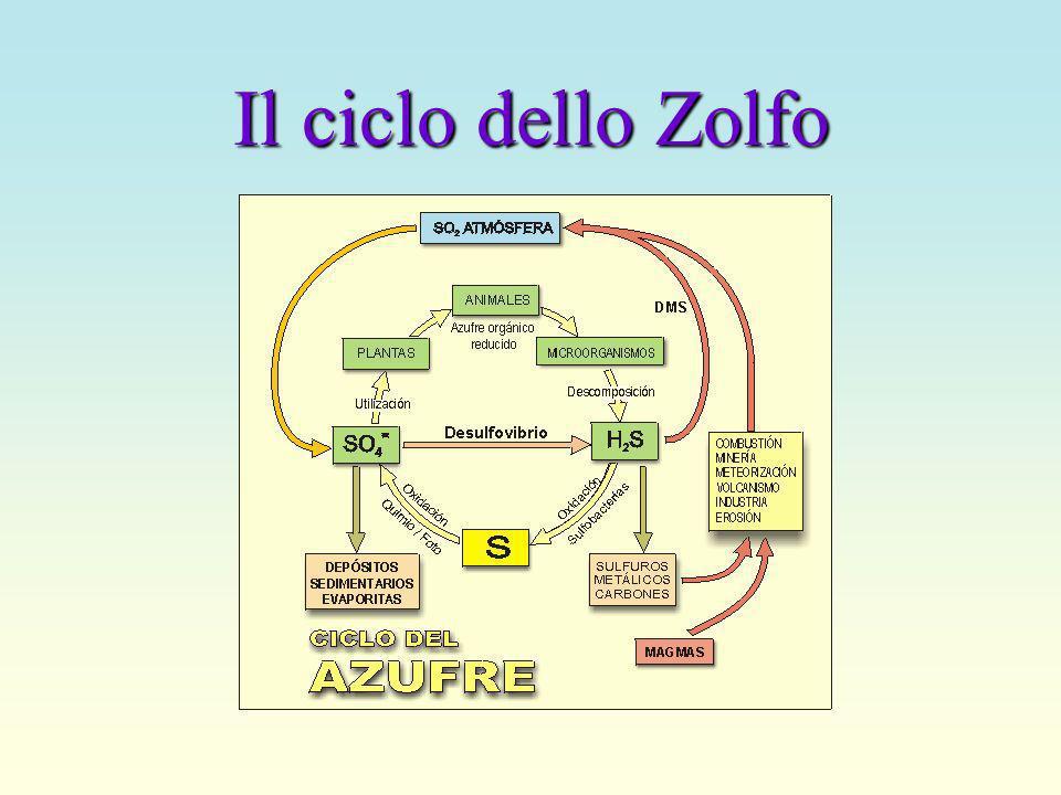 Il ciclo dello Zolfo
