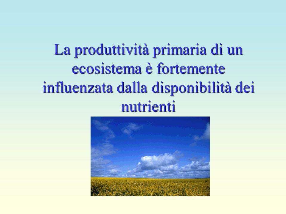 La produttività primaria di un ecosistema è fortemente influenzata dalla disponibilità dei nutrienti