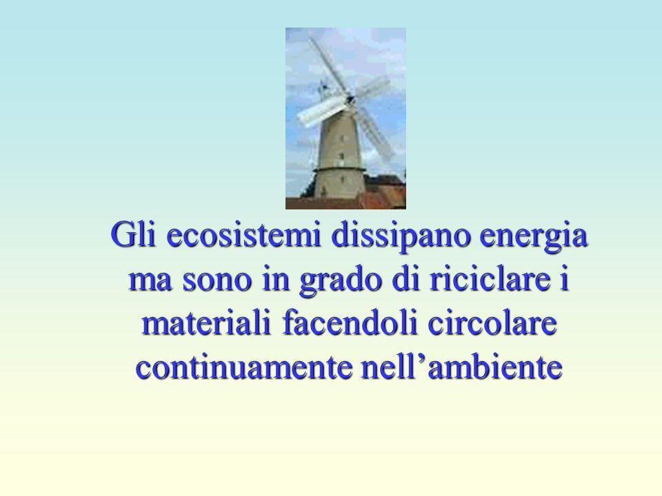 Gli ecosistemi dissipano energia ma sono in grado di riciclare i materiali facendoli circolare continuamente nell'ambiente