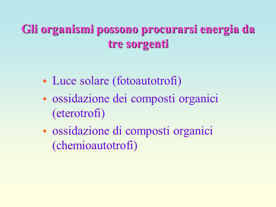 Gli organismi possono procurarsi energia da tre sorgenti