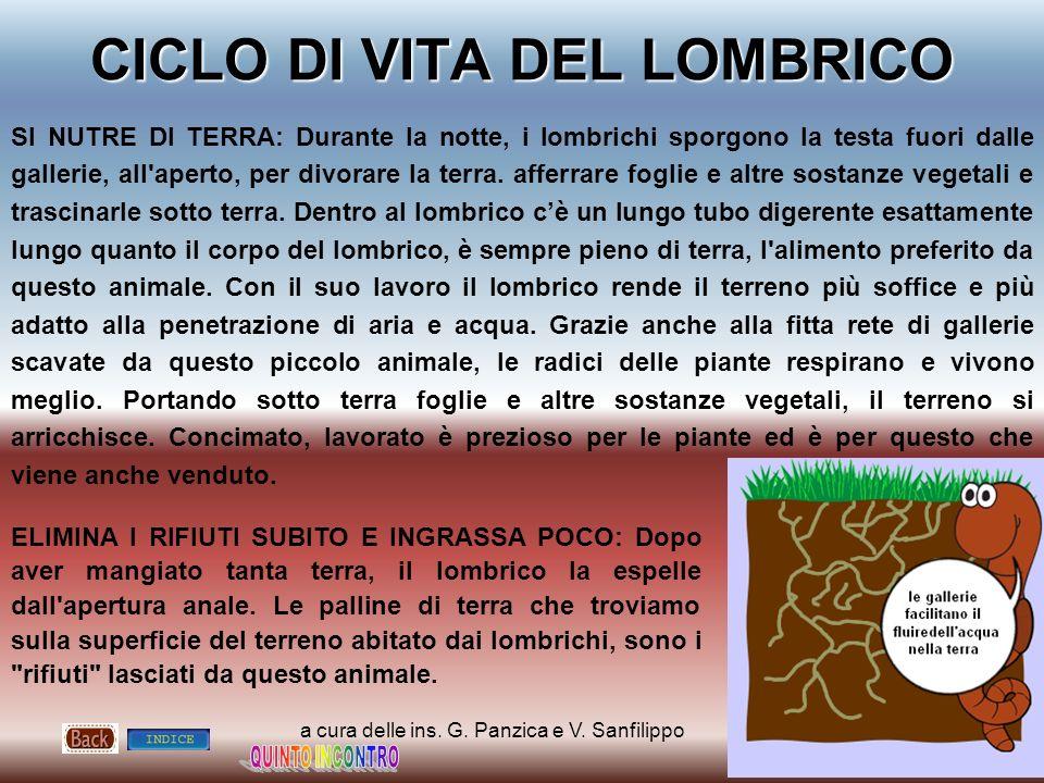 CICLO DI VITA DEL LOMBRICO