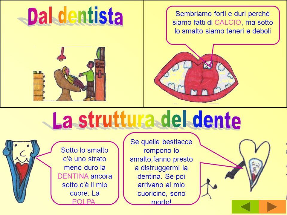 Dal dentista La struttura del dente