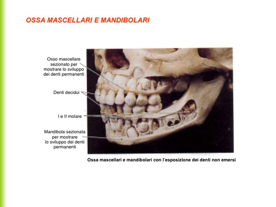 OSSA MASCELLARI E MANDIBOLARI