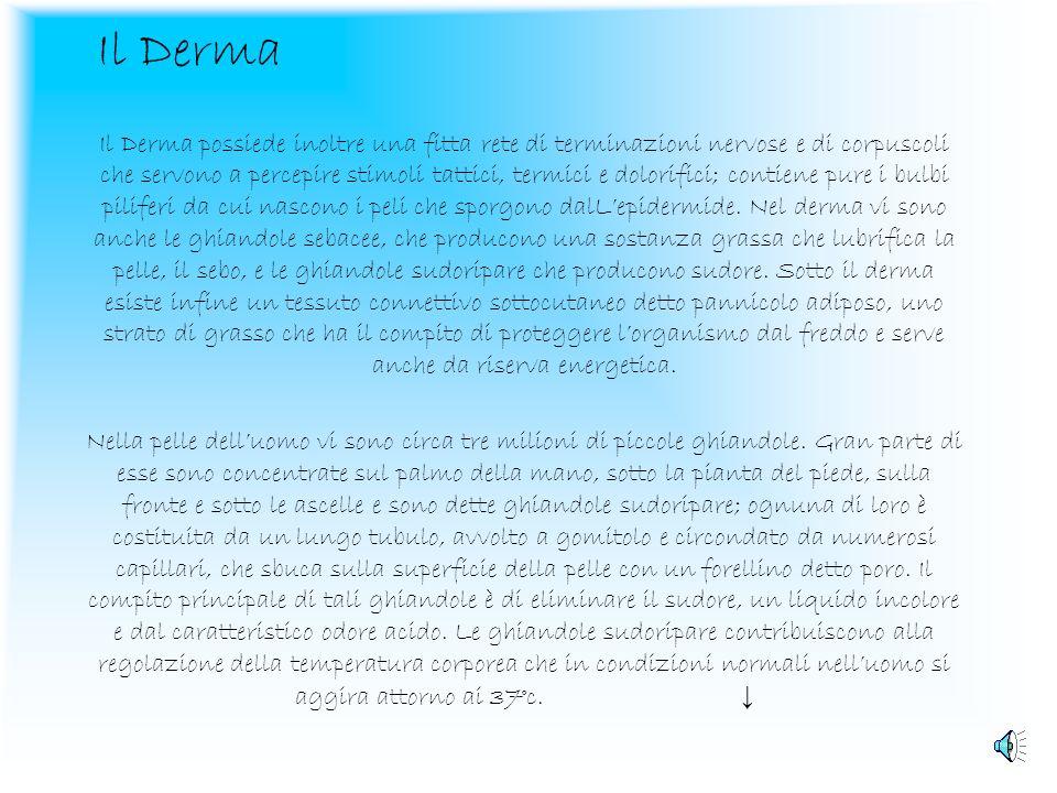 Il Derma