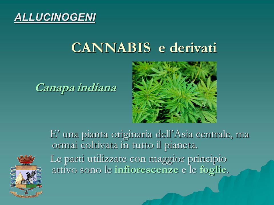 CANNABIS e derivati Canapa indiana