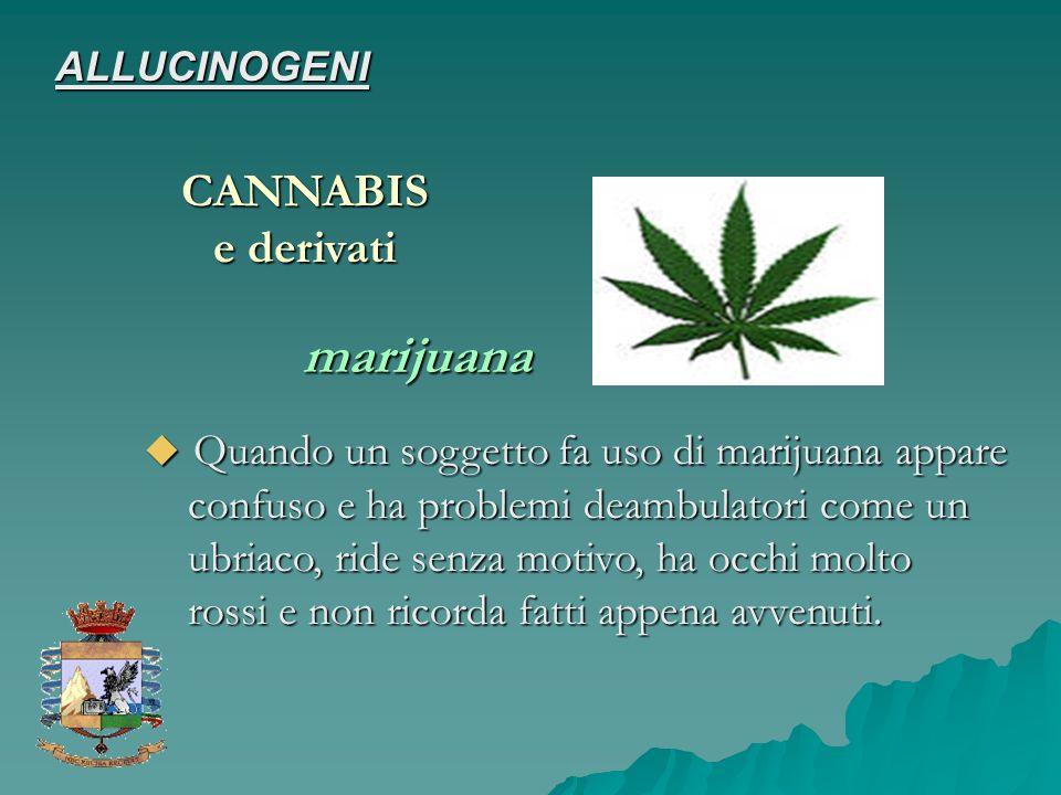 marijuana CANNABIS e derivati