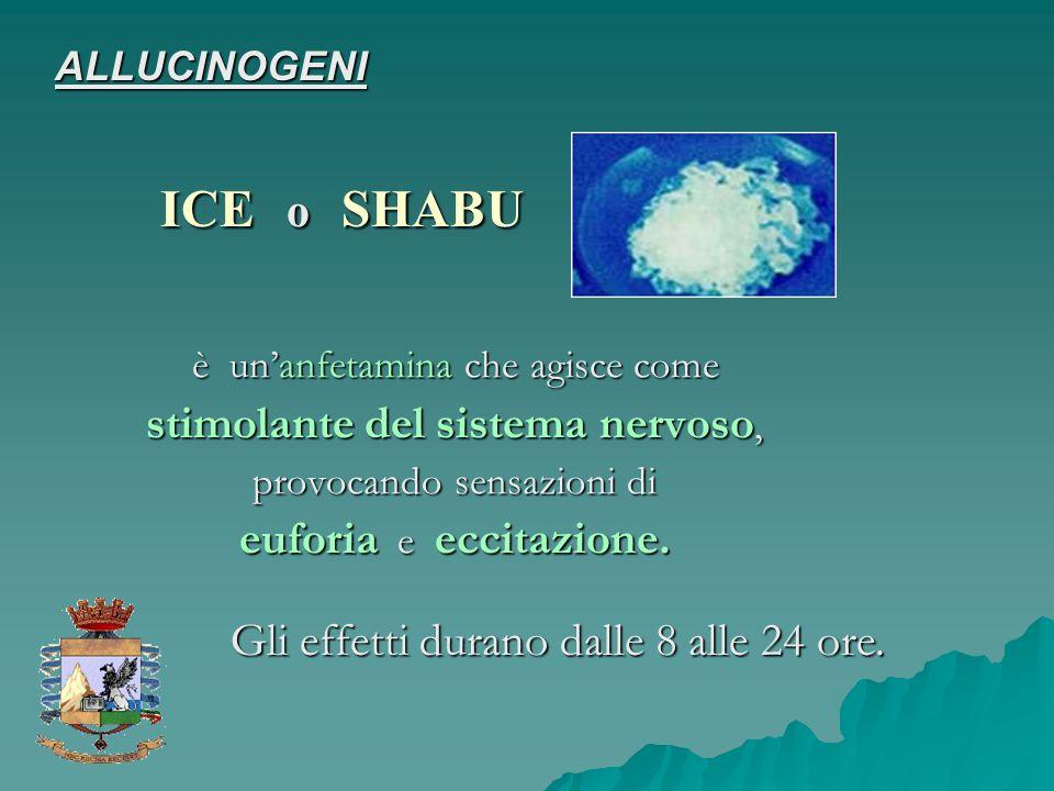 ICE o SHABU Gli effetti durano dalle 8 alle 24 ore. ALLUCINOGENI