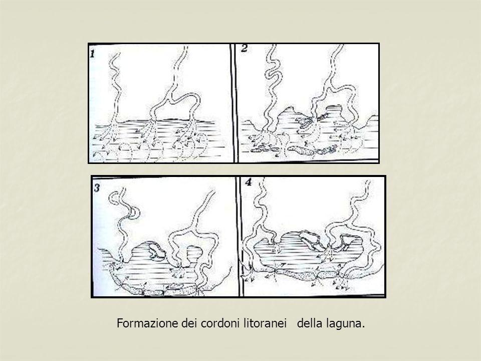 Formazione dei cordoni litoranei della laguna.