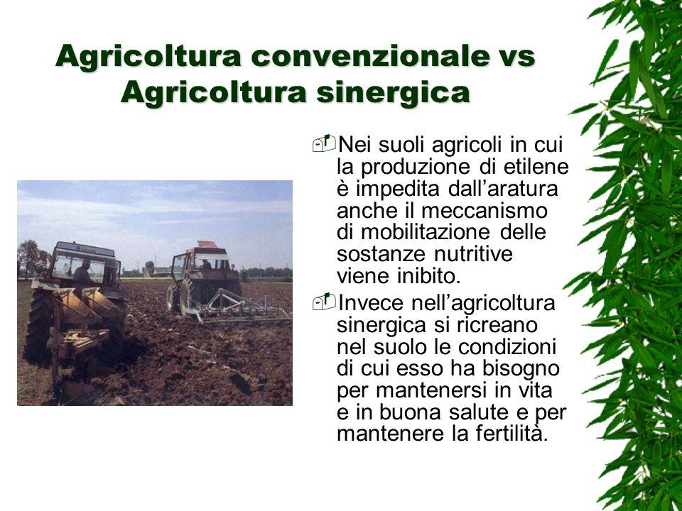 Agricoltura convenzionale vs Agricoltura sinergica