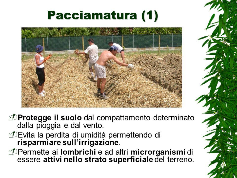 Pacciamatura (1) Protegge il suolo dal compattamento determinato dalla pioggia e dal vento.