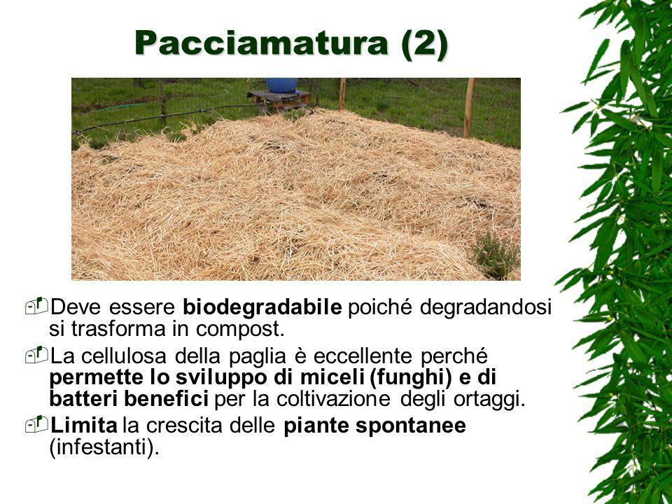 Pacciamatura (2) Deve essere biodegradabile poiché degradandosi si trasforma in compost.