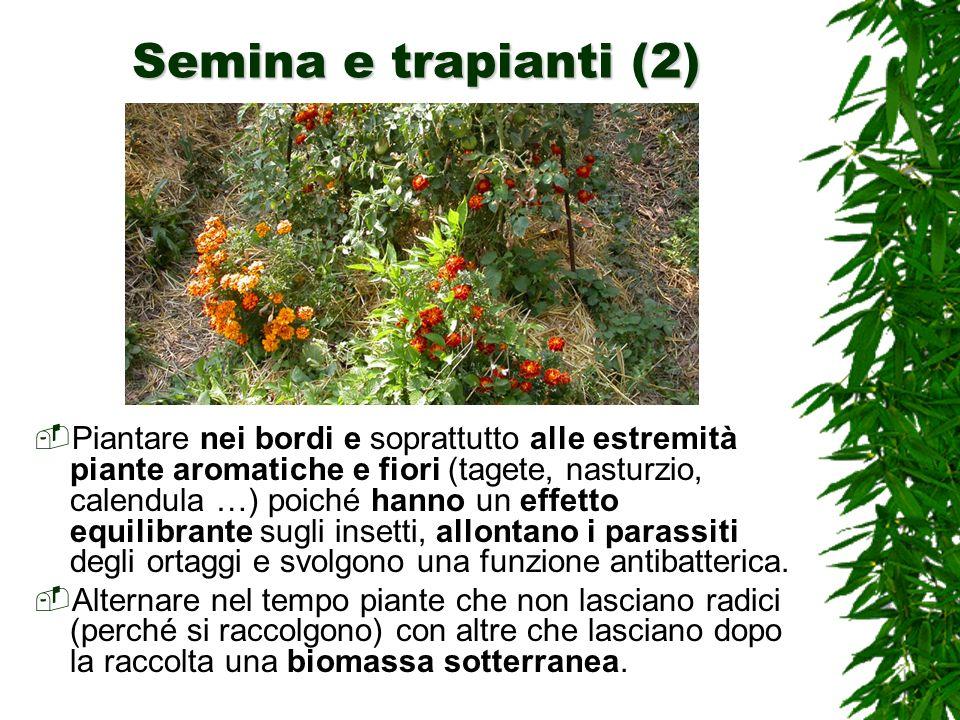 Semina e trapianti (2)