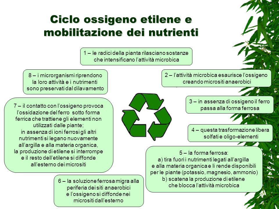 Ciclo ossigeno etilene e mobilitazione dei nutrienti