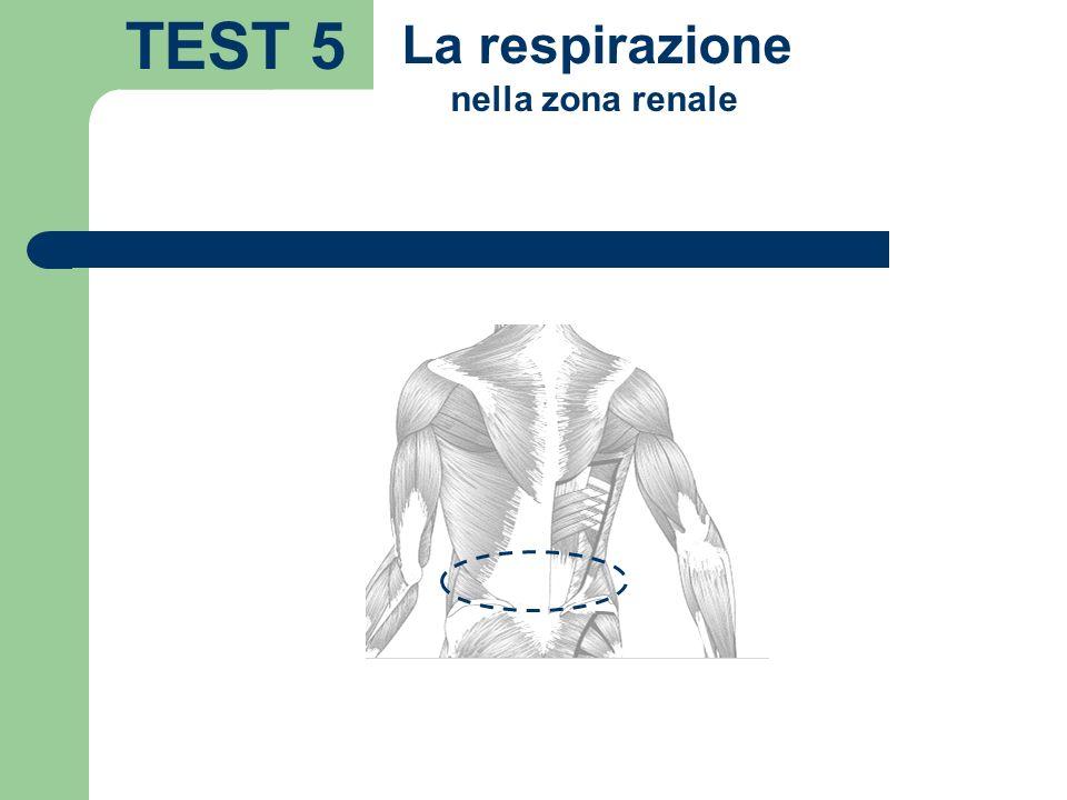 TEST 5 La respirazione nella zona renale