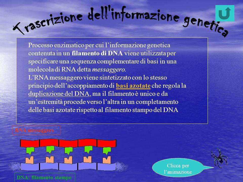 Trascrizione dell informazione genetica
