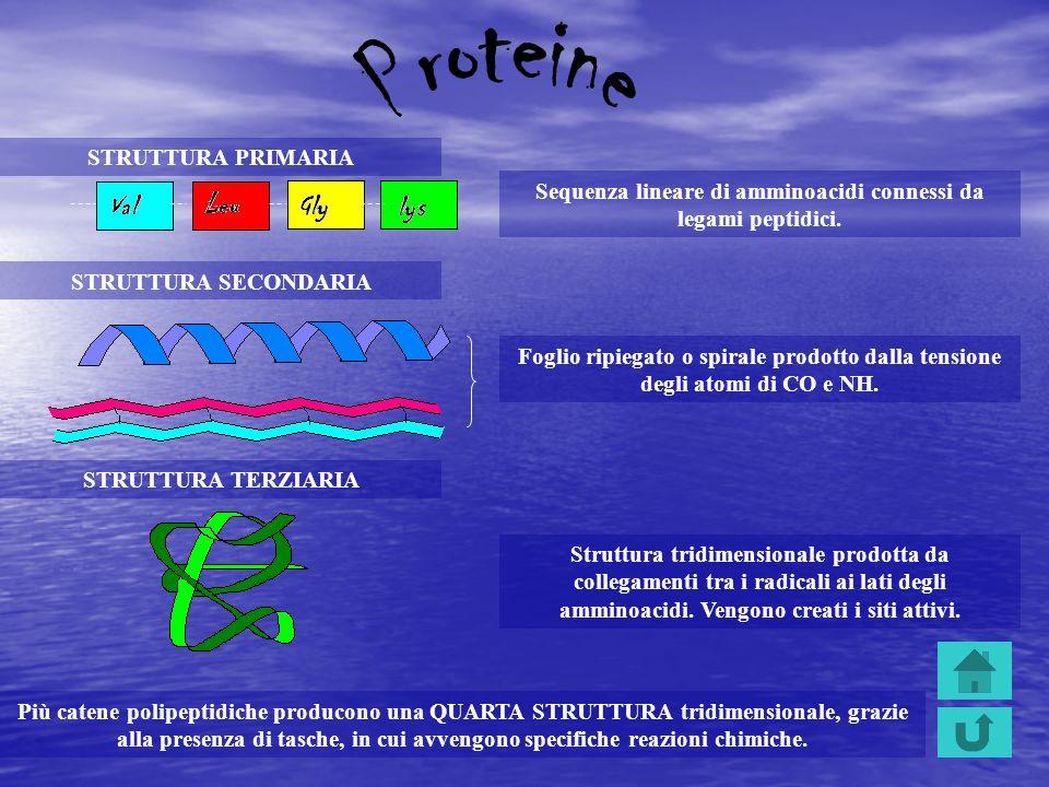 Sequenza lineare di amminoacidi connessi da legami peptidici.
