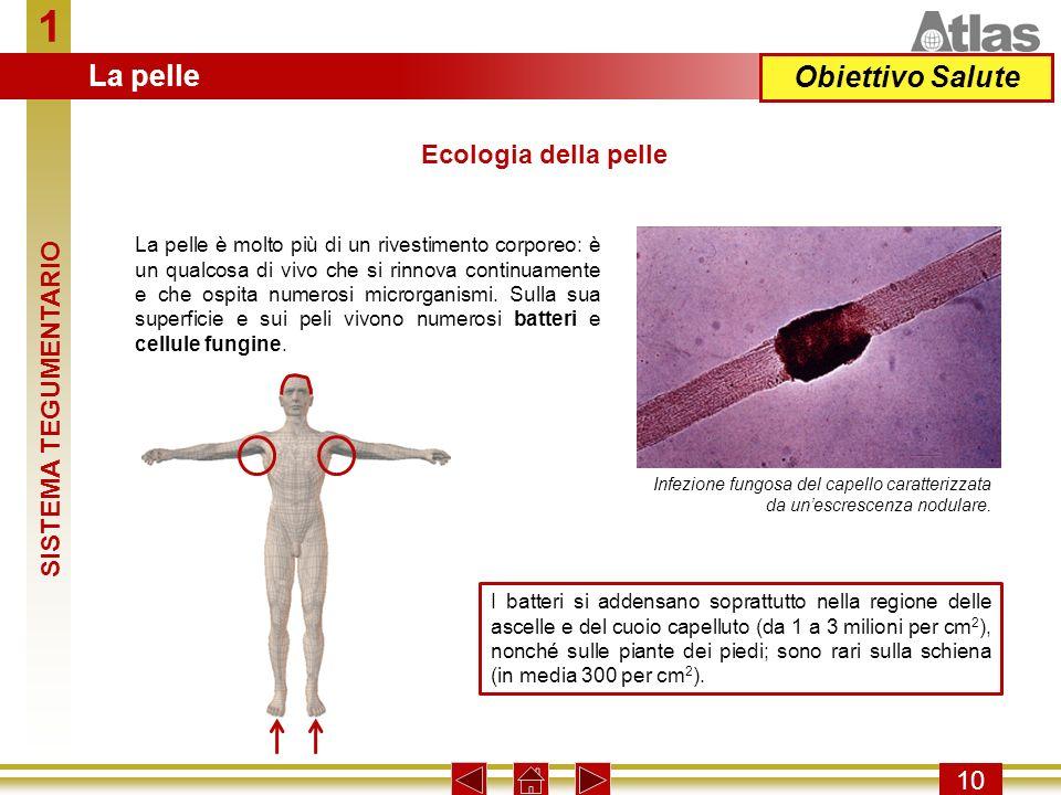 1 La pelle Obiettivo Salute Ecologia della pelle SISTEMA TEGUMENTARIO