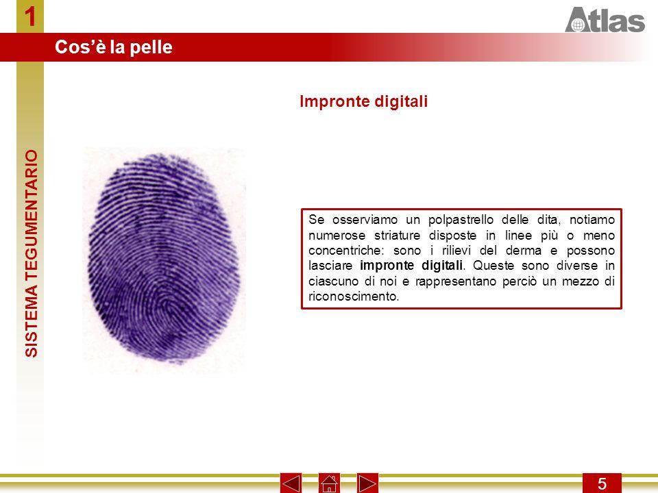 1 Cos'è la pelle Impronte digitali SISTEMA TEGUMENTARIO 5