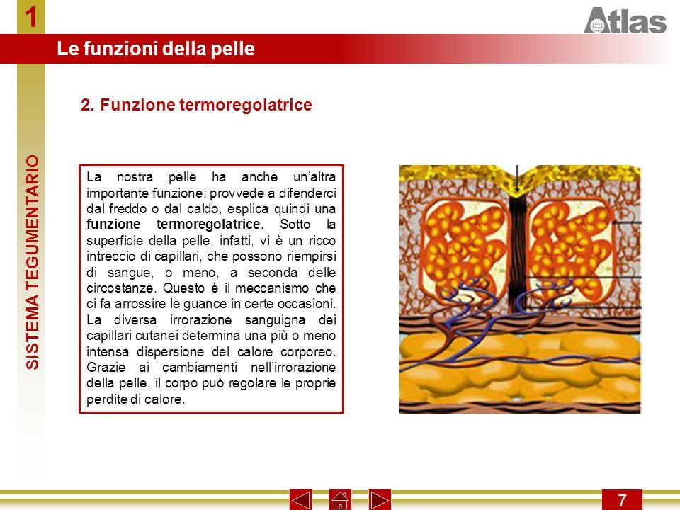 1 Le funzioni della pelle 2. Funzione termoregolatrice