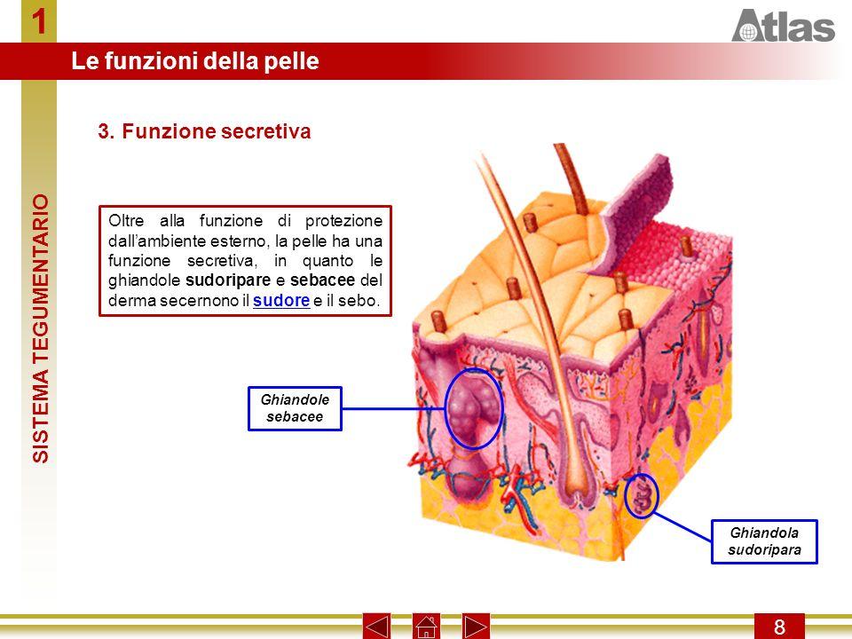 1 Le funzioni della pelle 3. Funzione secretiva SISTEMA TEGUMENTARIO 8