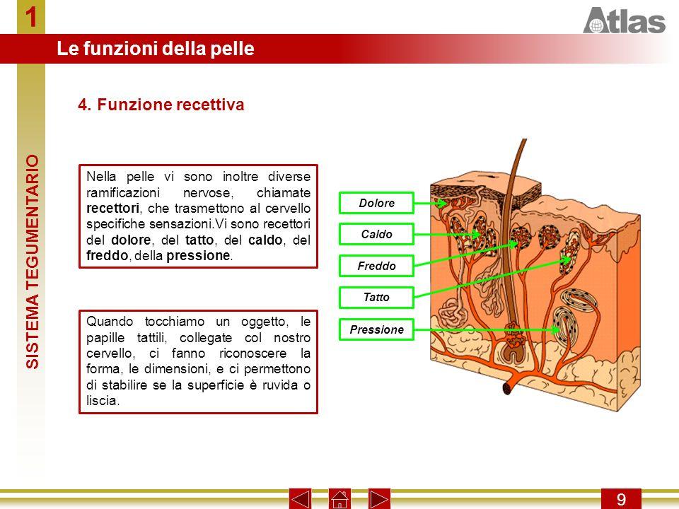 1 Le funzioni della pelle 4. Funzione recettiva SISTEMA TEGUMENTARIO 9
