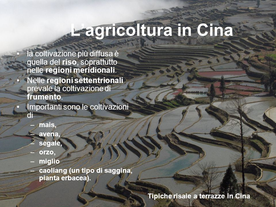 Tipiche risaie a terrazze in Cina