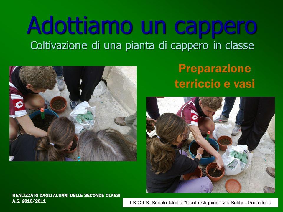 Adottiamo un cappero Coltivazione di una pianta di cappero in classe