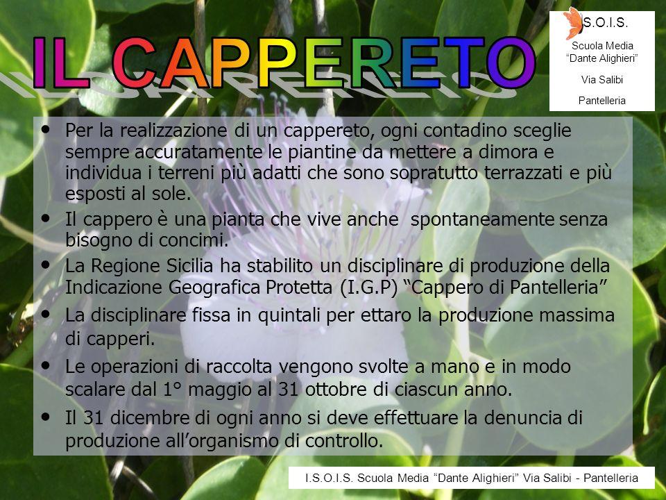 I.S.O.I.S. Scuola Media Dante Alighieri Via Salibi. Pantelleria. IL CAPPERETO.