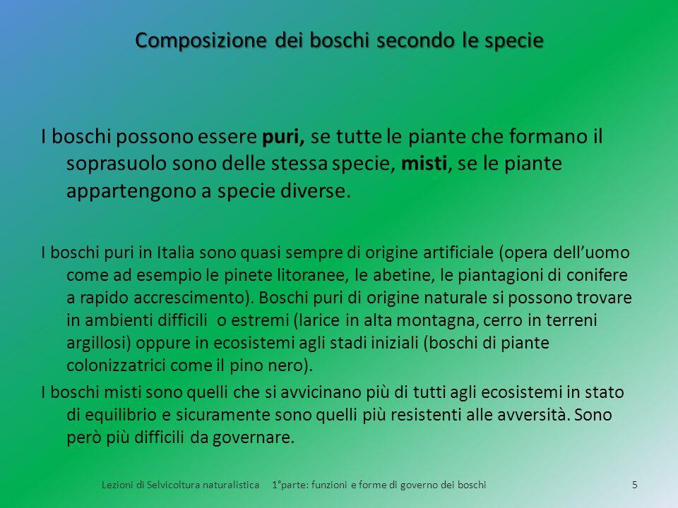Composizione dei boschi secondo le specie
