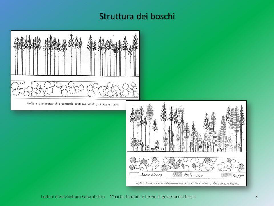 Struttura dei boschi Lezioni di Selvicoltura naturalistica 1°parte: funzioni e forme di governo dei boschi.