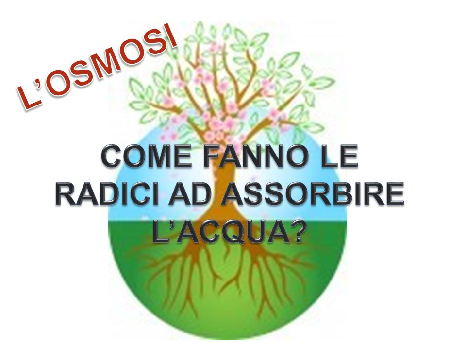 COME FANNO LE RADICI AD ASSORBIRE L'ACQUA