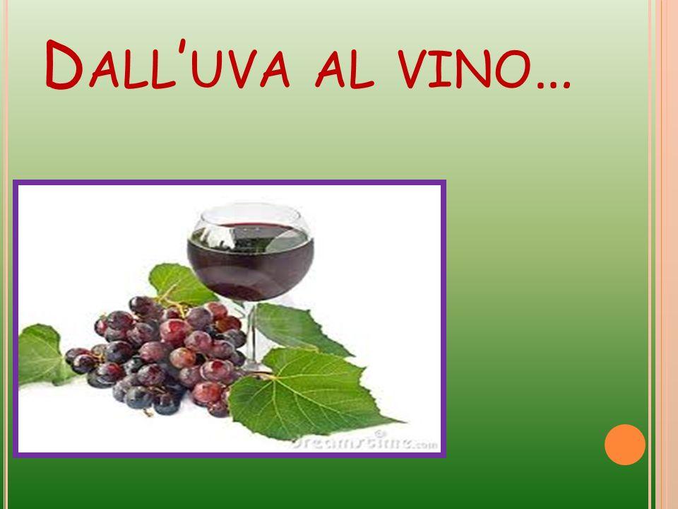 Dall'uva al vino…