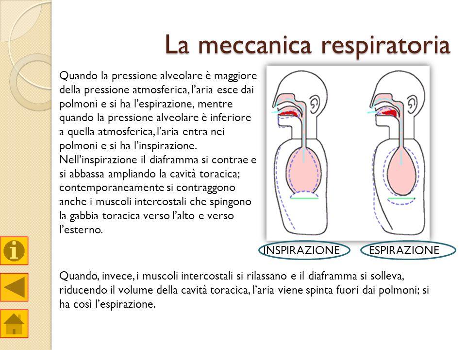 La meccanica respiratoria