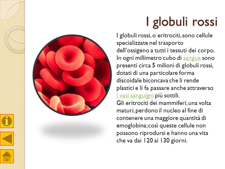 I globuli rossi