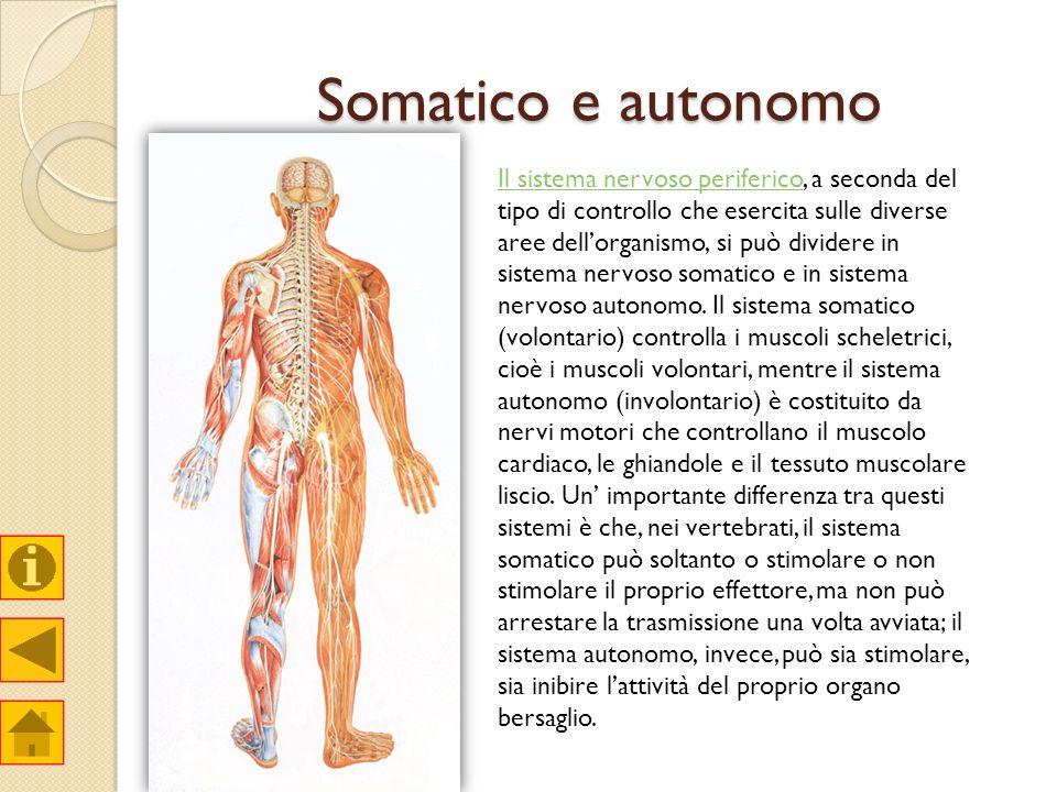Somatico e autonomo