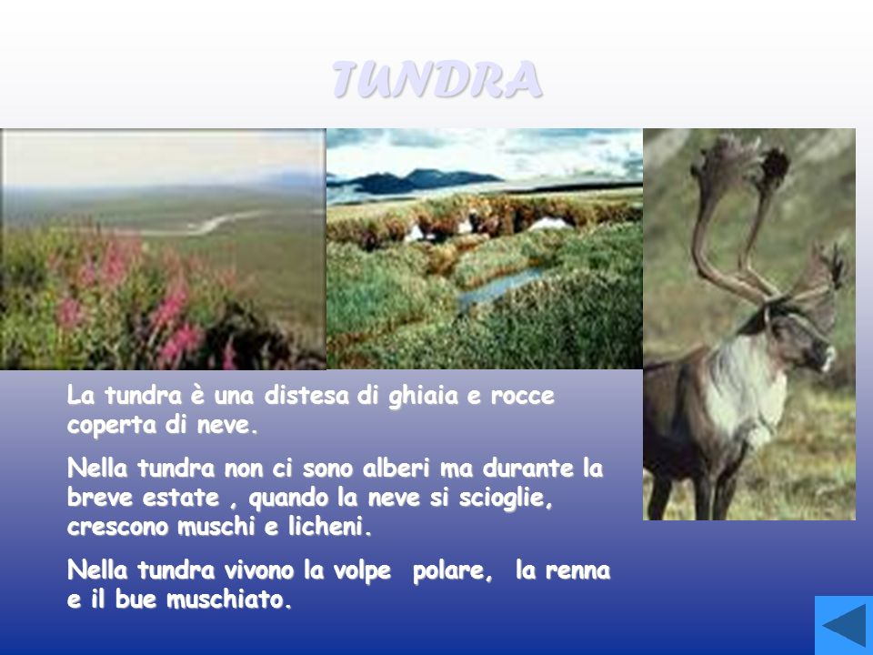 TUNDRA La tundra è una distesa di ghiaia e rocce coperta di neve.