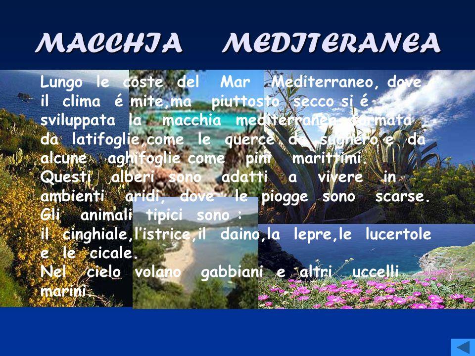 MACCHIA MEDITERANEA