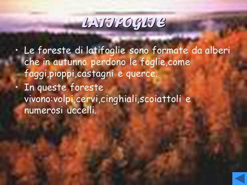 LATIFOGLIELe foreste di latifoglie sono formate da alberi che in autunno perdono le foglie,come faggi,pioppi,castagni e querce.