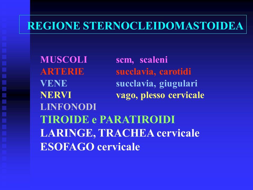 REGIONE STERNOCLEIDOMASTOIDEA