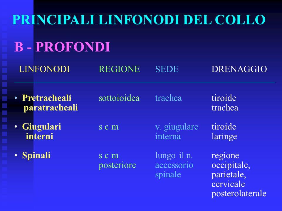 PRINCIPALI LINFONODI DEL COLLO