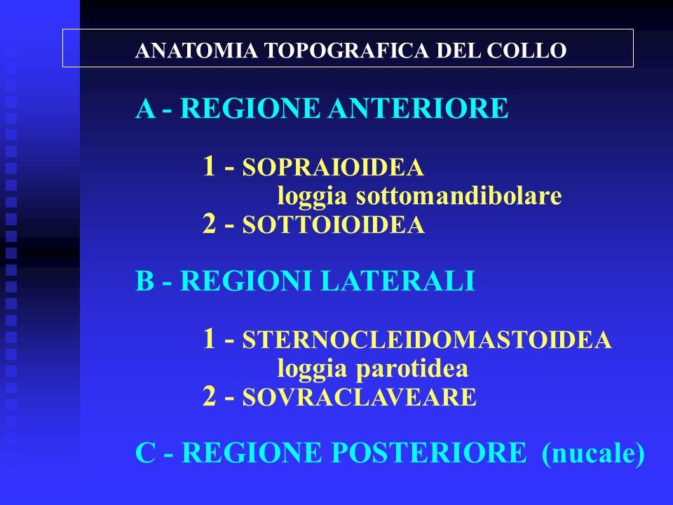 ANATOMIA TOPOGRAFICA DEL COLLO