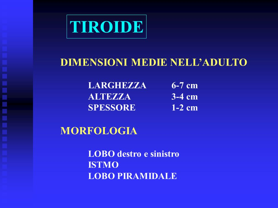 TIROIDE DIMENSIONI MEDIE NELL'ADULTO MORFOLOGIA LARGHEZZA 6-7 cm