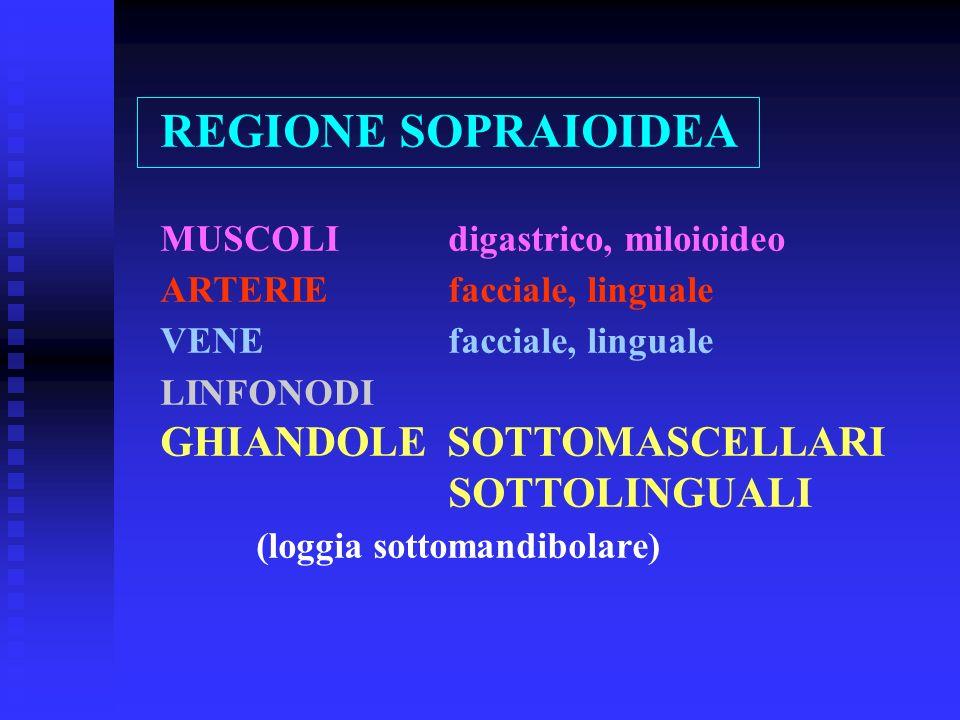 REGIONE SOPRAIOIDEA MUSCOLI digastrico, miloioideo