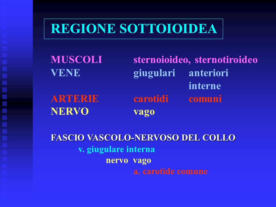 REGIONE SOTTOIOIDEA MUSCOLI sternoioideo, sternotiroideo