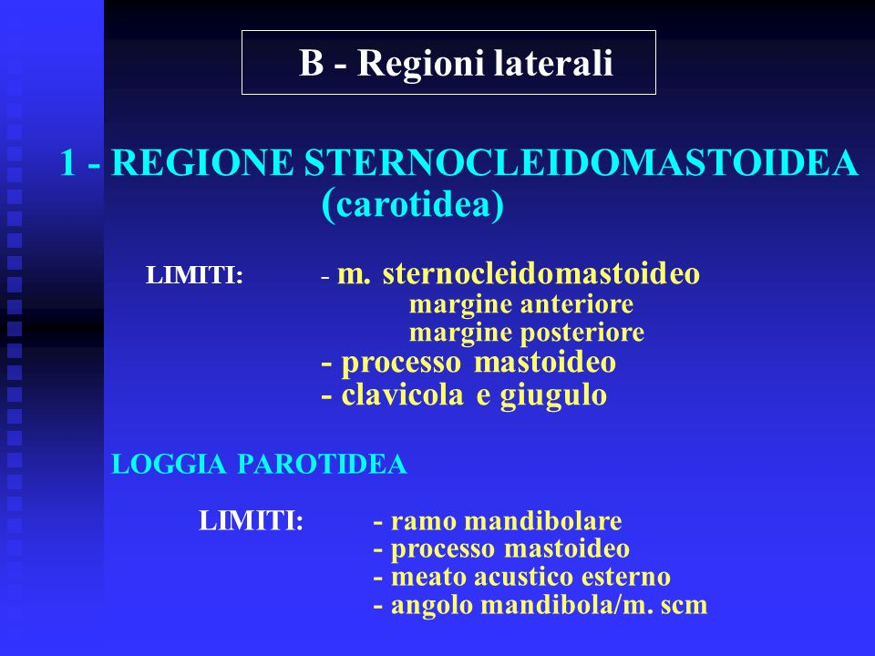 (carotidea) B - Regioni laterali 1 - REGIONE STERNOCLEIDOMASTOIDEA