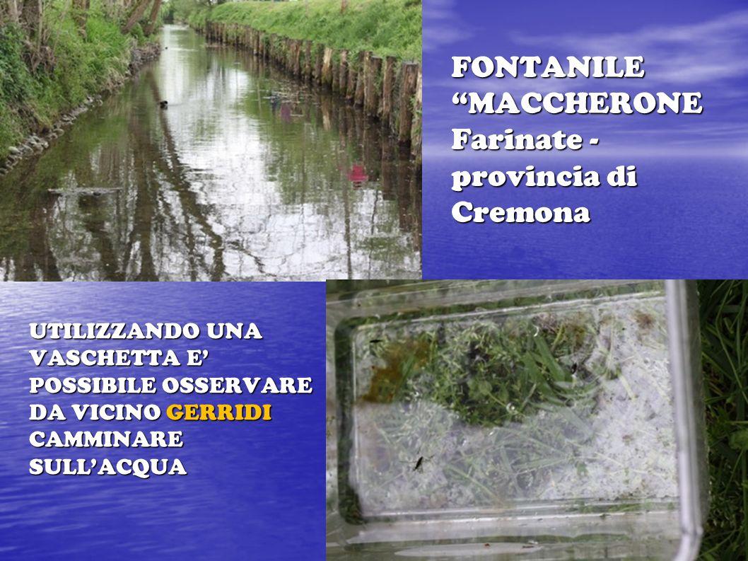 FONTANILE MACCHERONE Farinate - provincia di Cremona